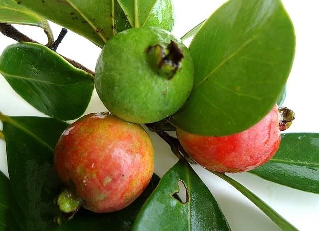 Araçá fruta: 20 benefícios, informação nutricional e malefícios