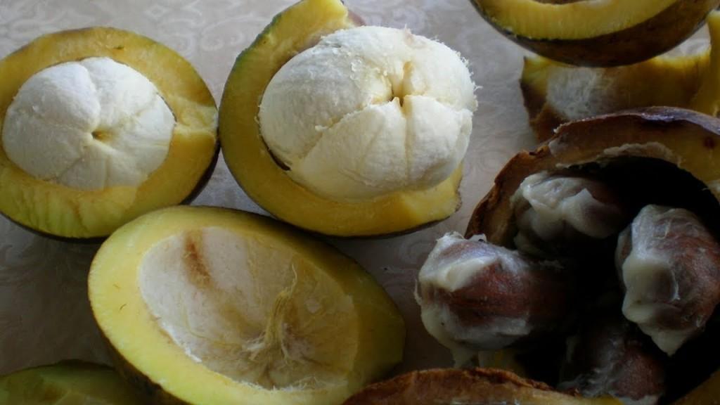Bacuri fruta