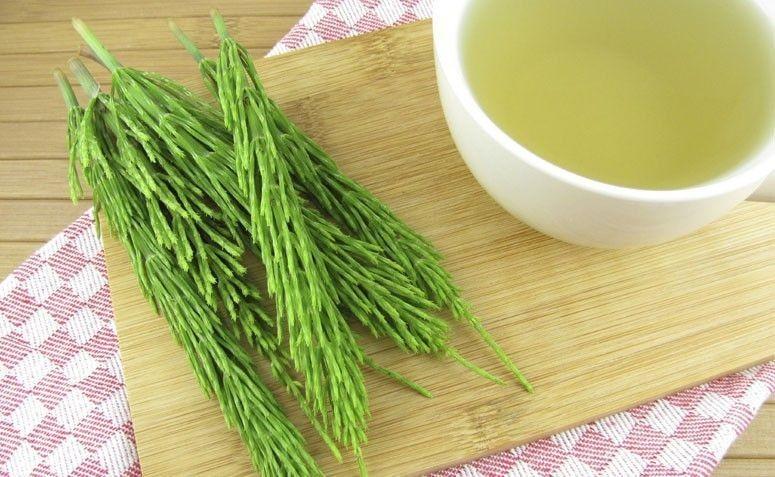 Benefícios Chá de Cavalinha