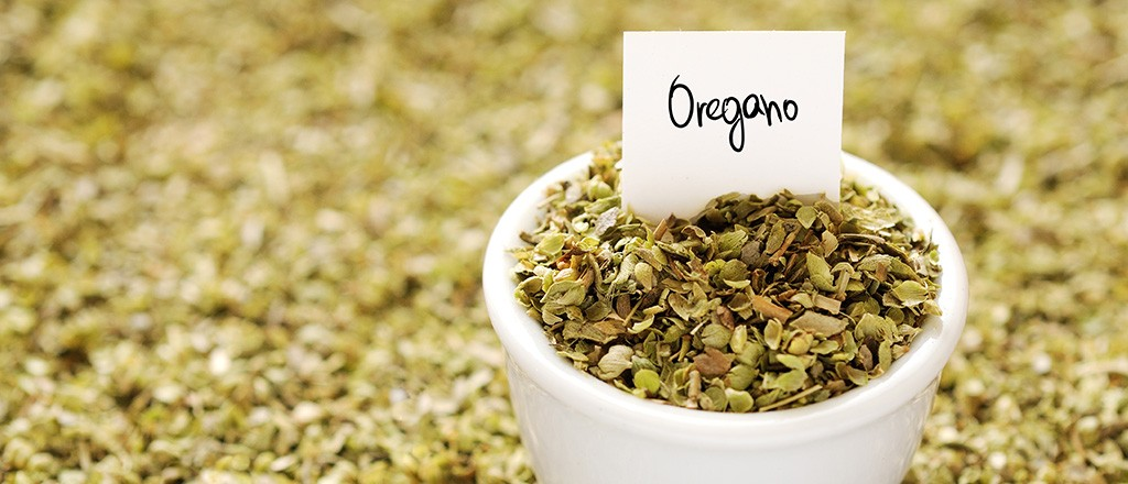 beneficio do Oregano