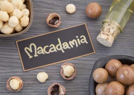 macadamia beneficios