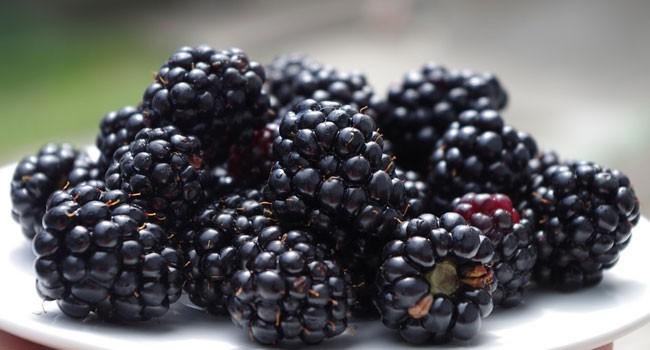 Amora Preta fruta: 40 benefícios e informação nutricional