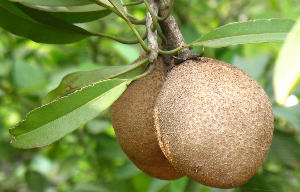 beneficios do mamey