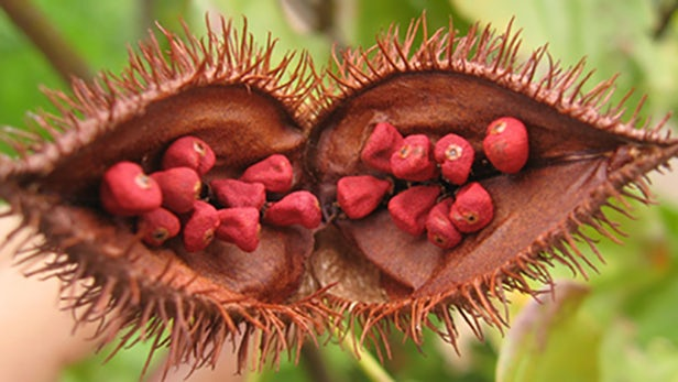 beneficios do urucum