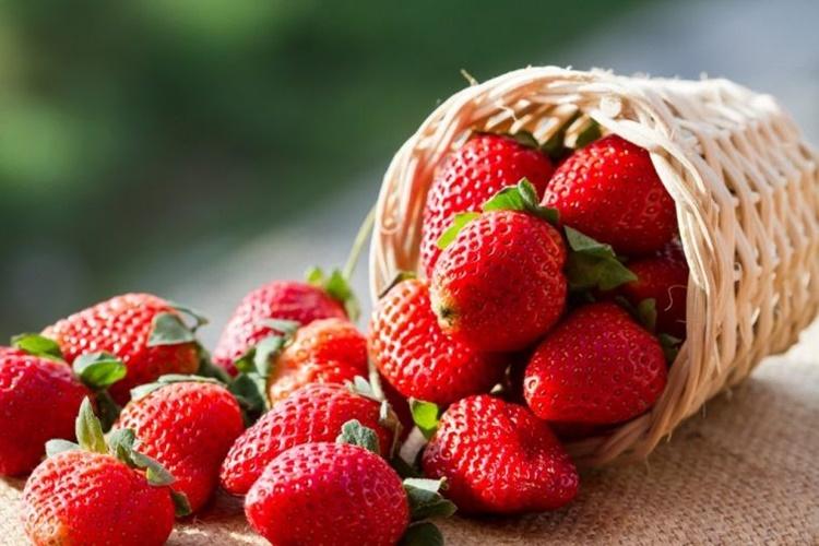 Morango fruta: 31 benefícios, informação nutricional e malefícios