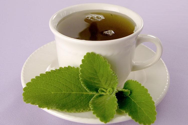 Chá de Boldo serve para quê? Veja benefícios e como fazer