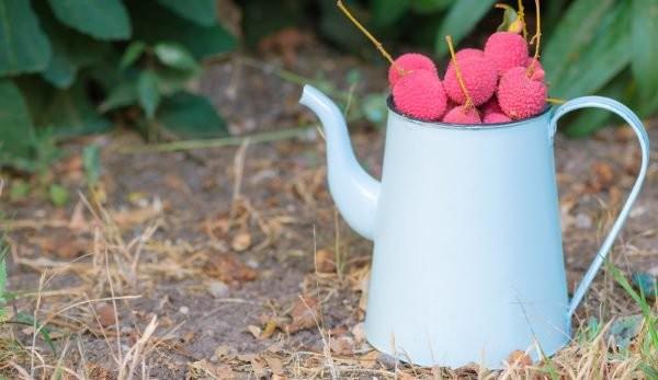 Chá de Lichia beneficios