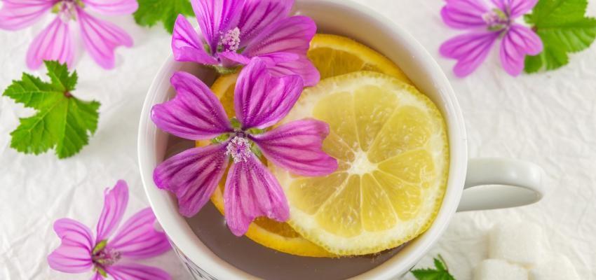 Chá de Malva serve para quê? Veja benefícios e como fazer