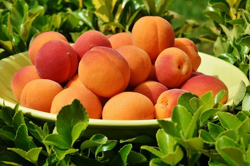 damasco fruta