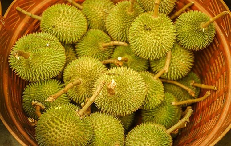 beneficios do durian