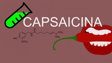 fonte de capsaicina