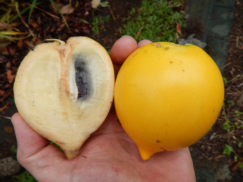 Abiu fruta: 42 benefícios, informação nutricional e malefícios