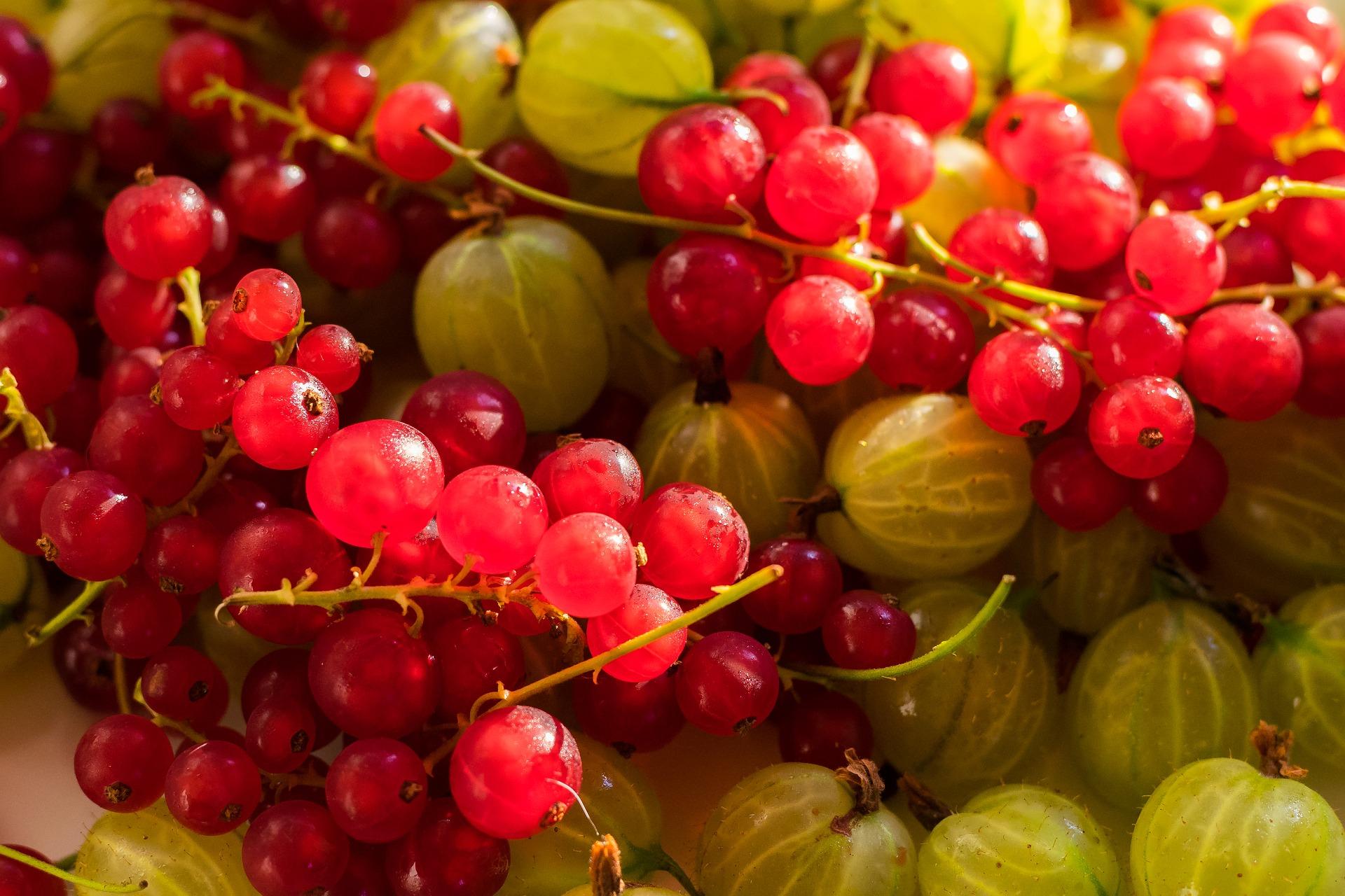 Groselha fruta: 25 benefícios, informação nutricional e malefícios