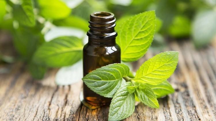 benefícios do óleo de hortelã