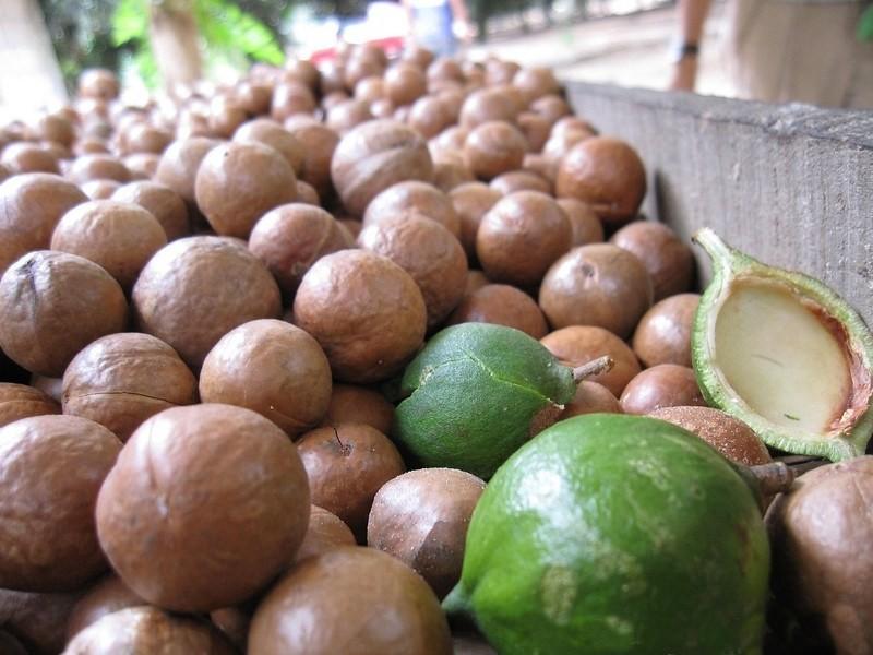 beneficio macadamia