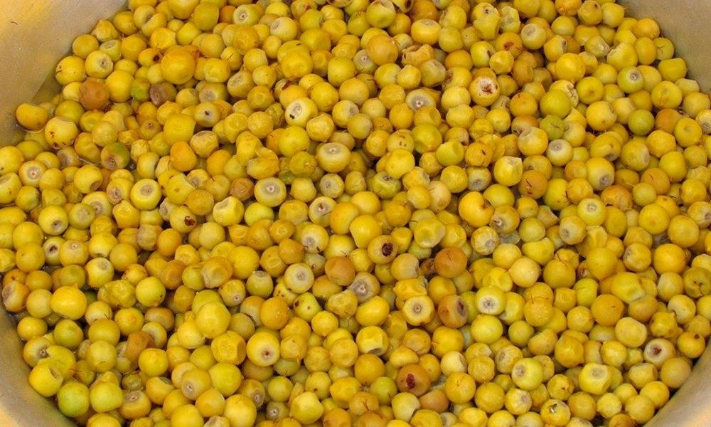 Muricifruta