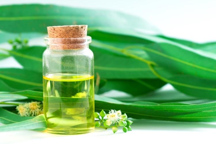 oleo de eucalipto