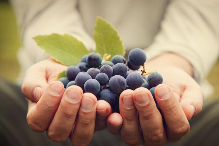 uva fruta