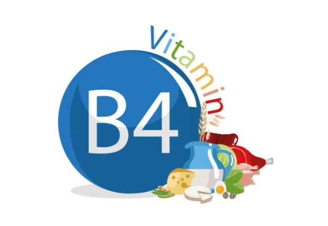 Alimento Vitamina B4