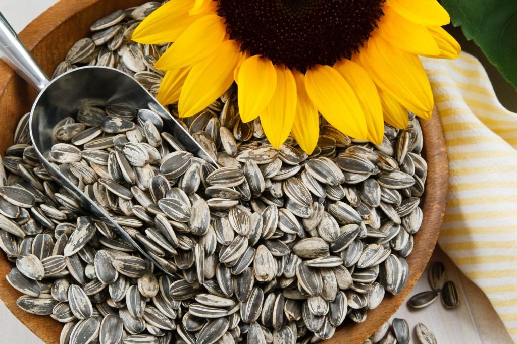 Benefício do Chá da Semente de Girassol