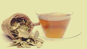 Benefícios do Chá de Buxo