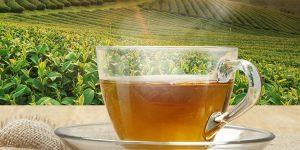 Benefícios do Chá de Ceilão