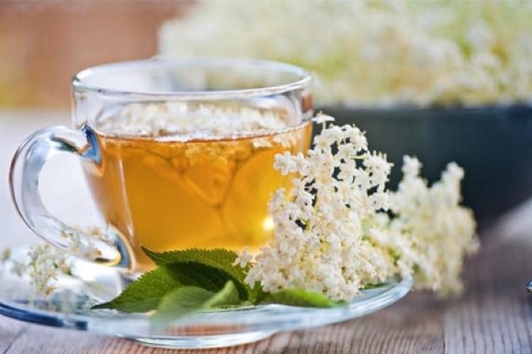 Chá de Sabugueiro