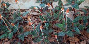 beneficios da orquideas