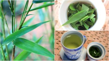 beneficios do cha de bambu