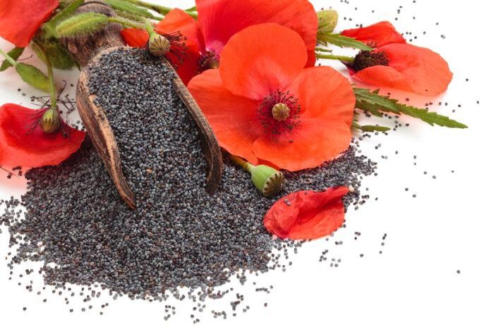 Benefícios do Chá de Papoula