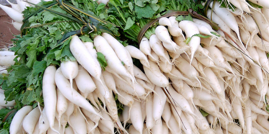 beneficios do rabanete daikon
