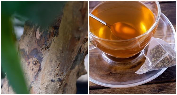 Chá da Casca de Goiaba serve para quê? Veja benefícios e como fazer