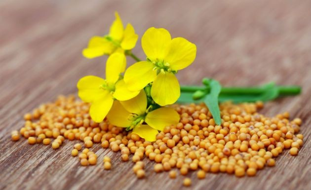 cha de semente de mostarda