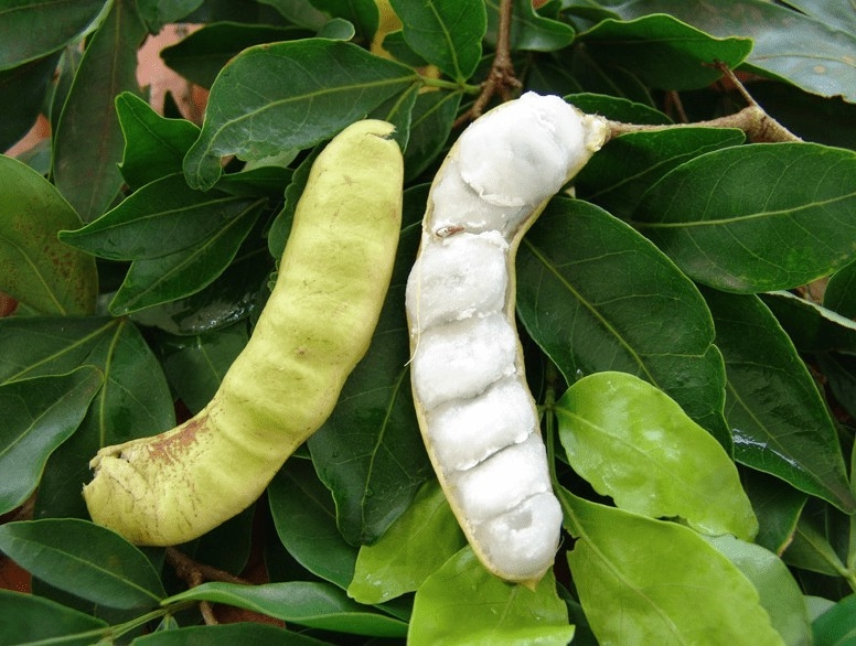 Ingá Branco fruta: 12 benefícios, informação nutricional e malefícios