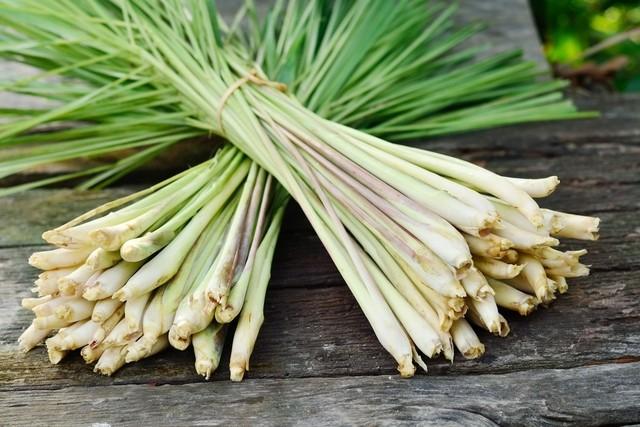 Óleo de Lemongrass para que serve? como tomar, benefícios e malefícios