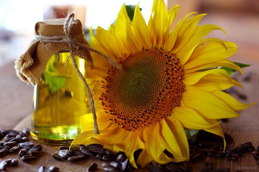 benefícios do óleo de girassol
