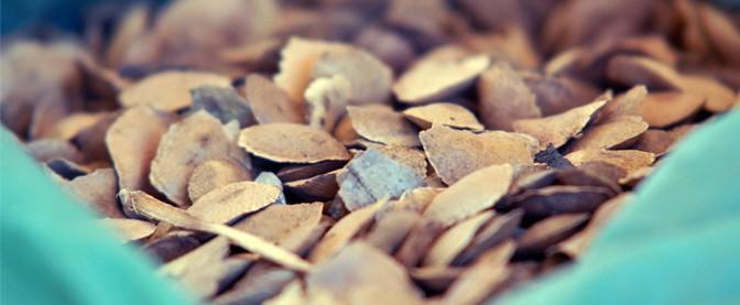 semenetes de sucupira remedio