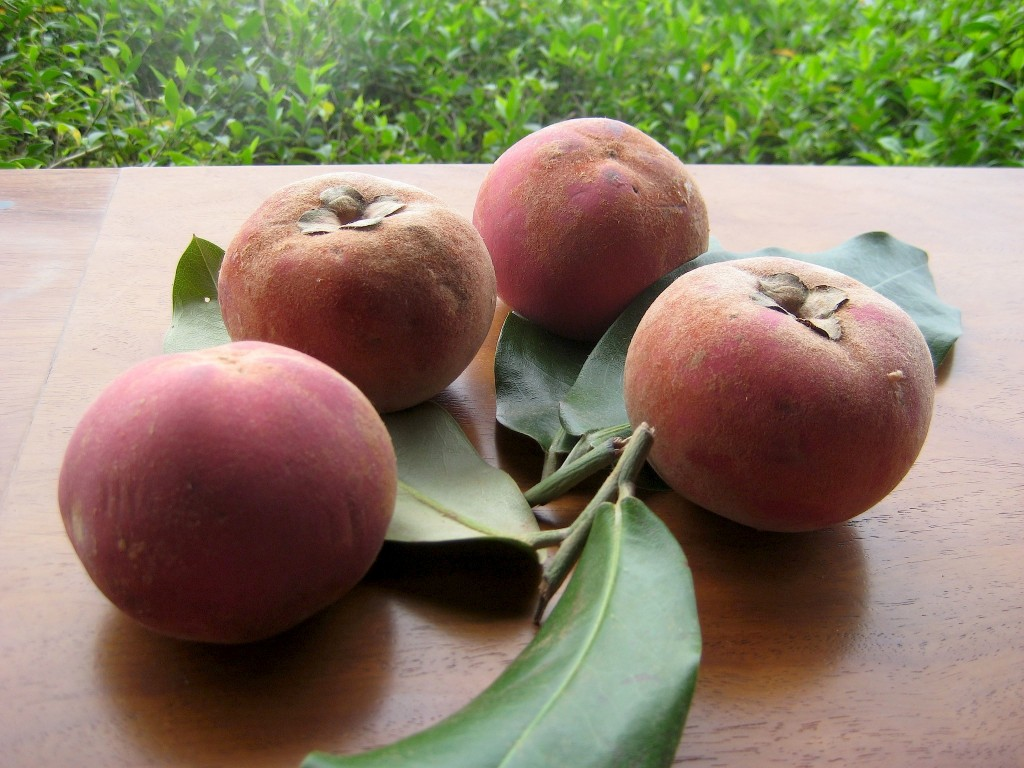 mabolo fruta