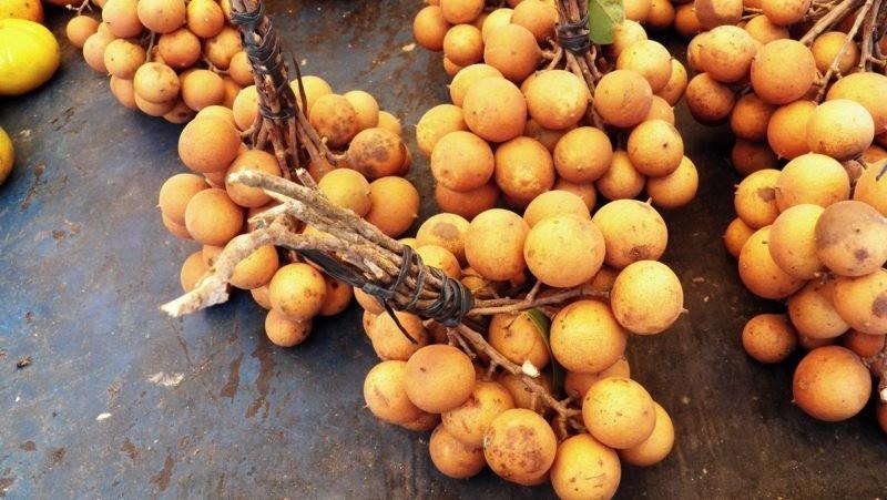 benefícios do suco de pitomba