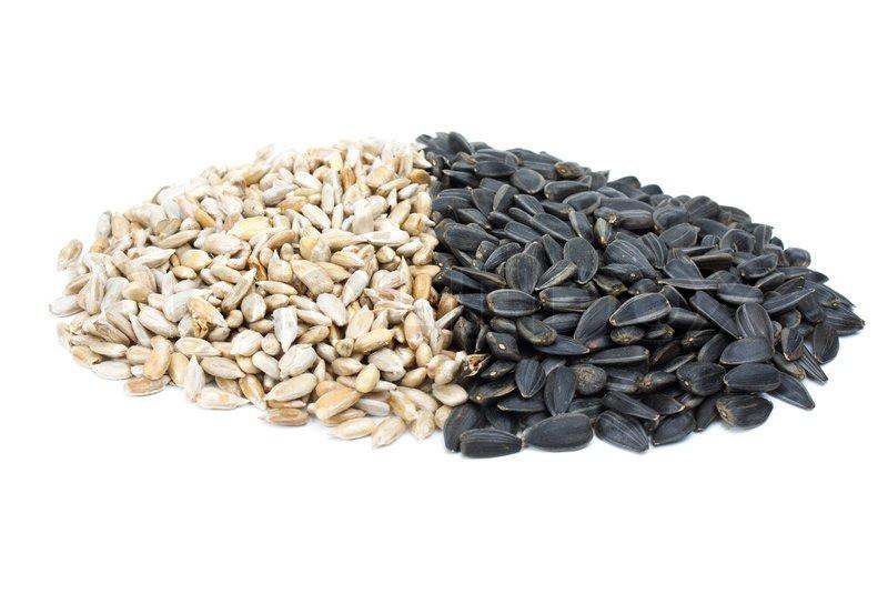 tipos de sementes de girasol