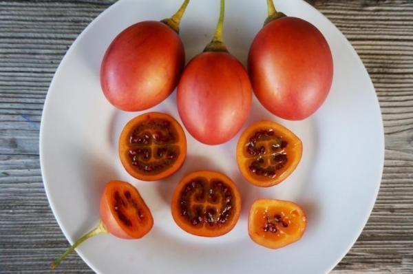 tomate de Arvóre