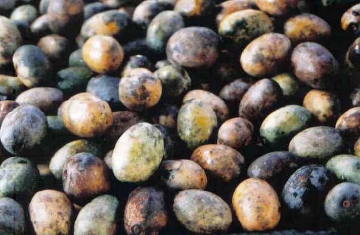 Uxi fruta: 30 benefícios, informação nutricional e malefícios