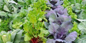 folhas comestiveis beneficios